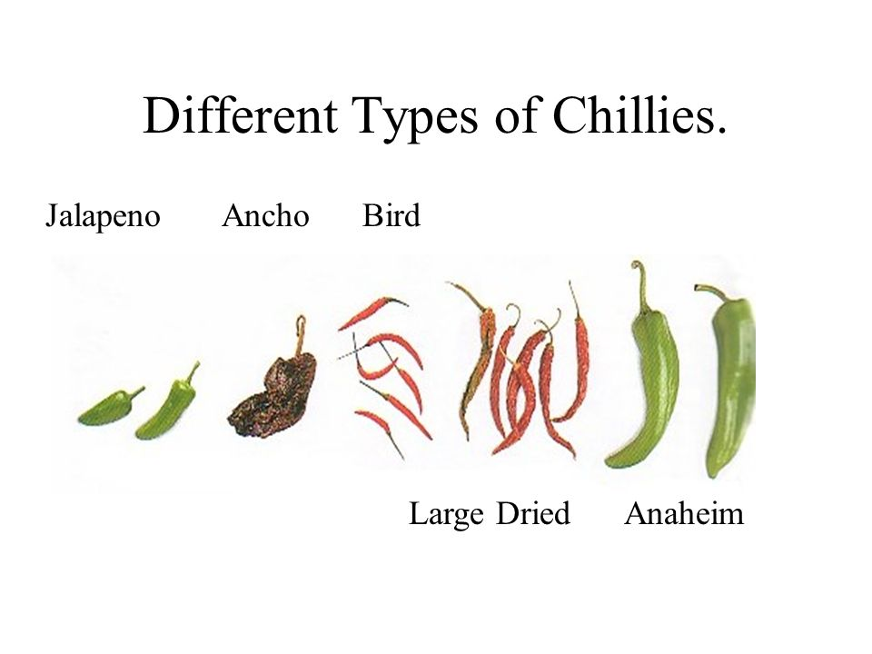 Different Types of Chillies.