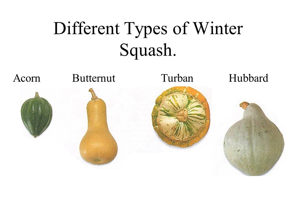 Different Types of Winter Squash.