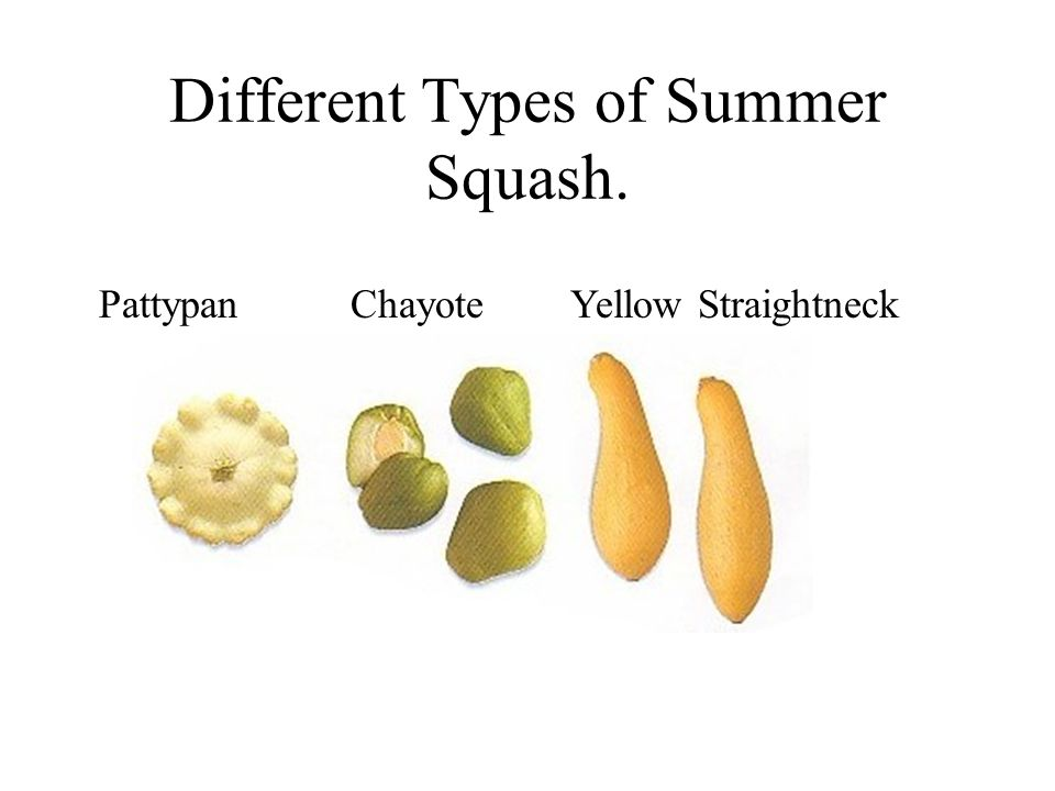Different Types of Summer Squash.