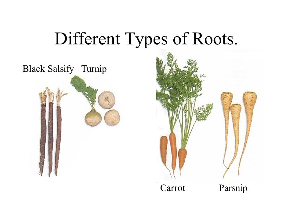 Different Types of Roots.