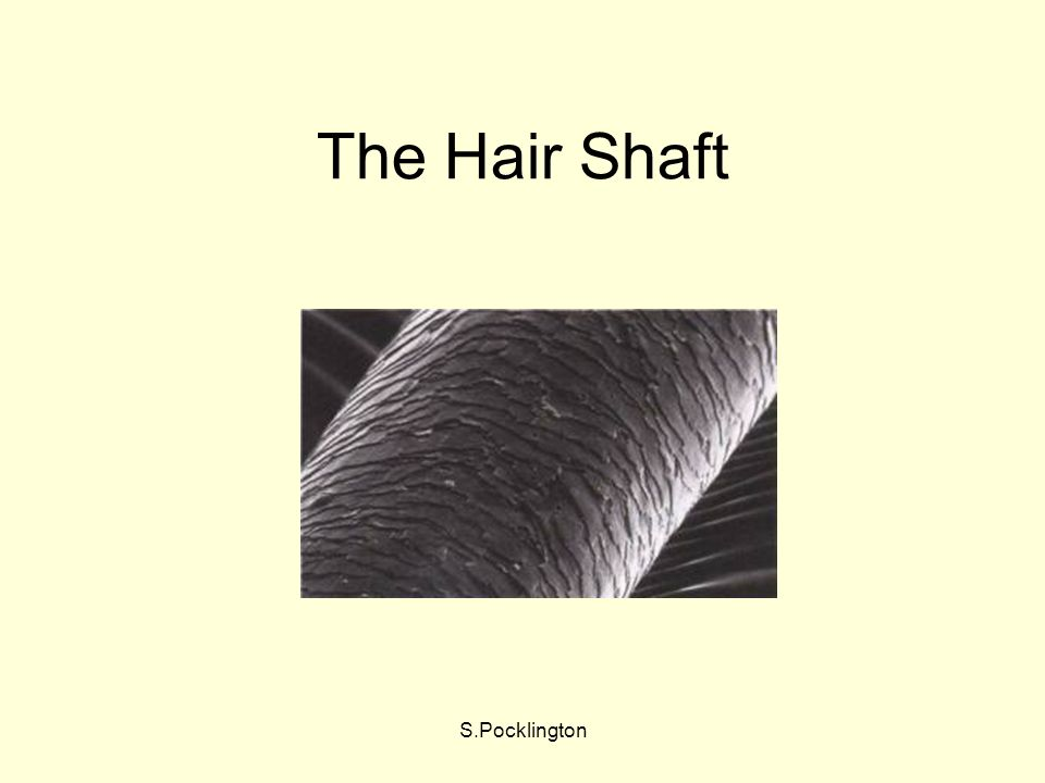 The Hair Shaft S.Pocklington