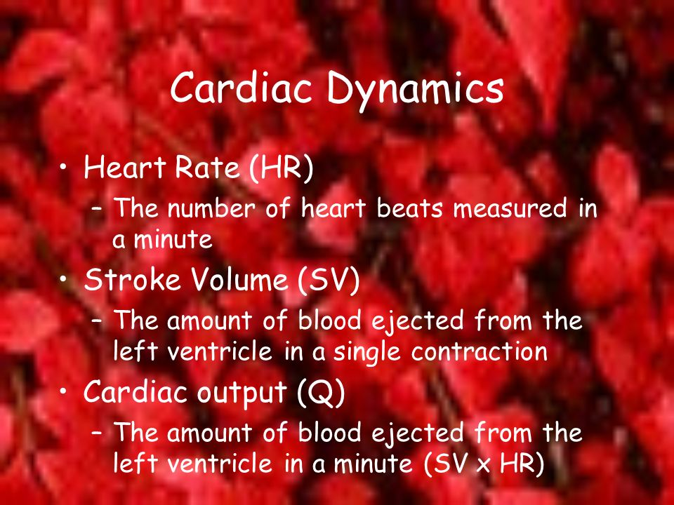 Cardiac Dynamics Heart Rate (HR) Stroke Volume (SV) Cardiac output (Q)