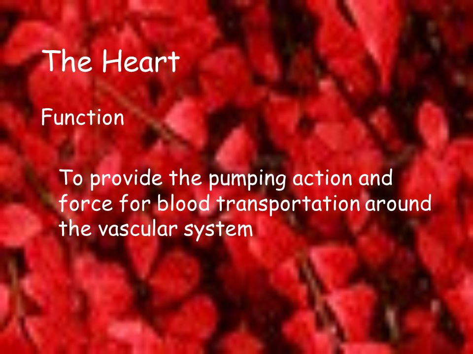 The Heart Function.