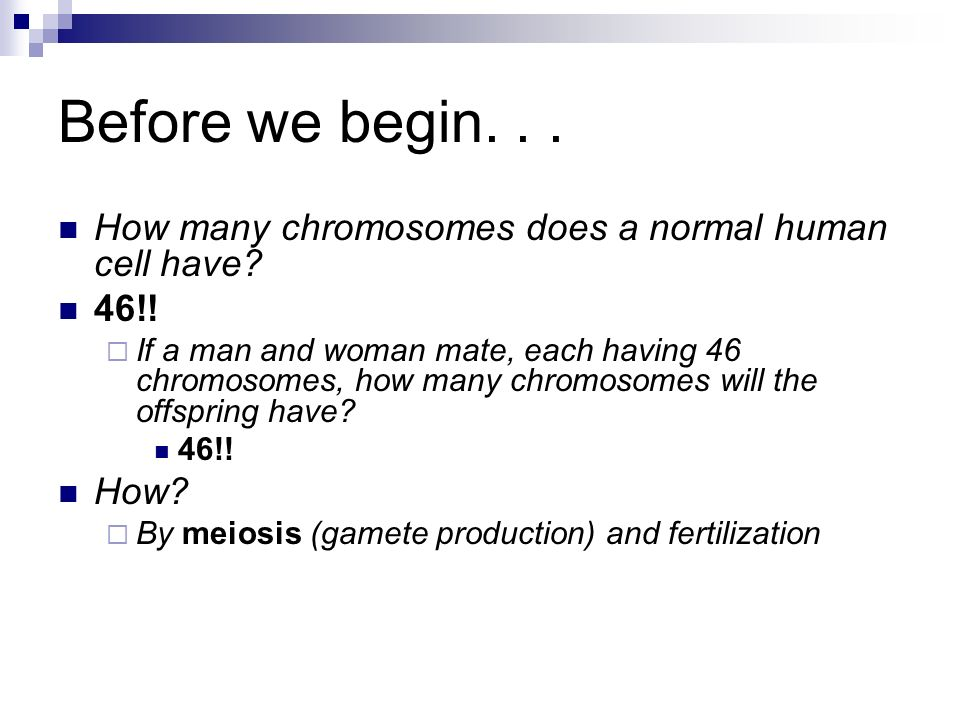 How many sex chromosomes are in a human gamete photo 60
