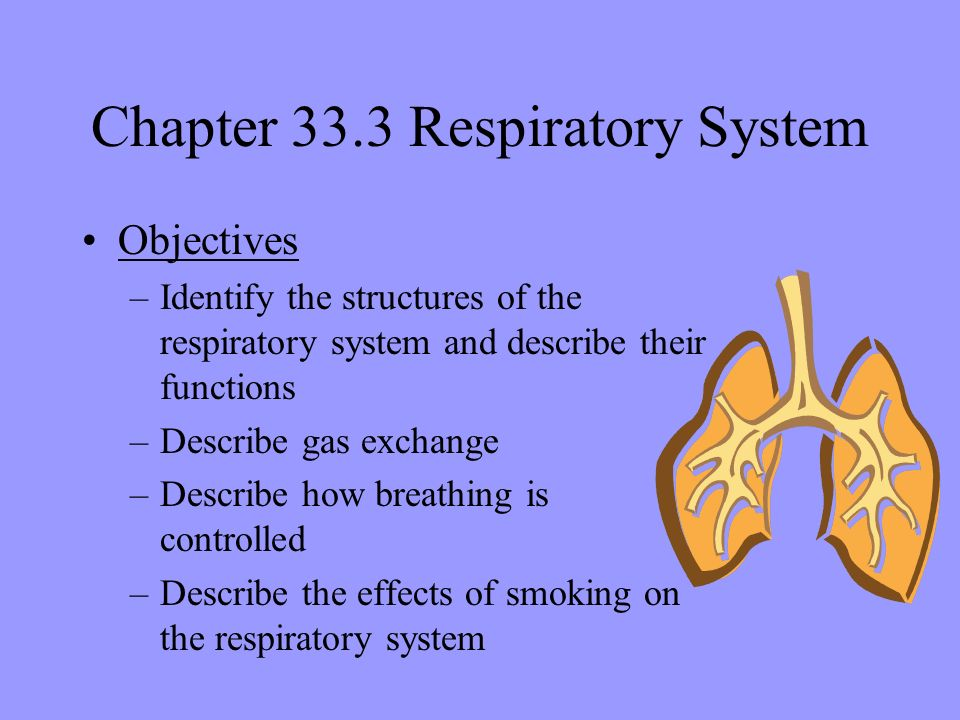 respiratory system objective and subjective questions Taking a respiratory history answers to these questions provide you with important information about the patient's current problem and background data.