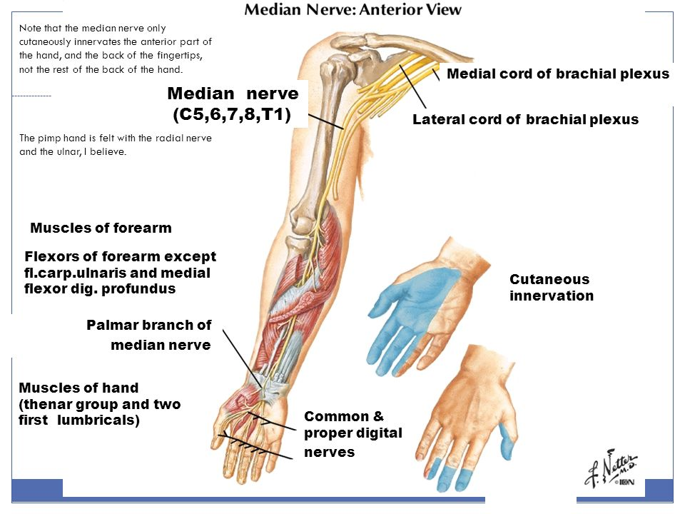 Upper Limb Part I Shoulder Arm And Axilla Ppt Download