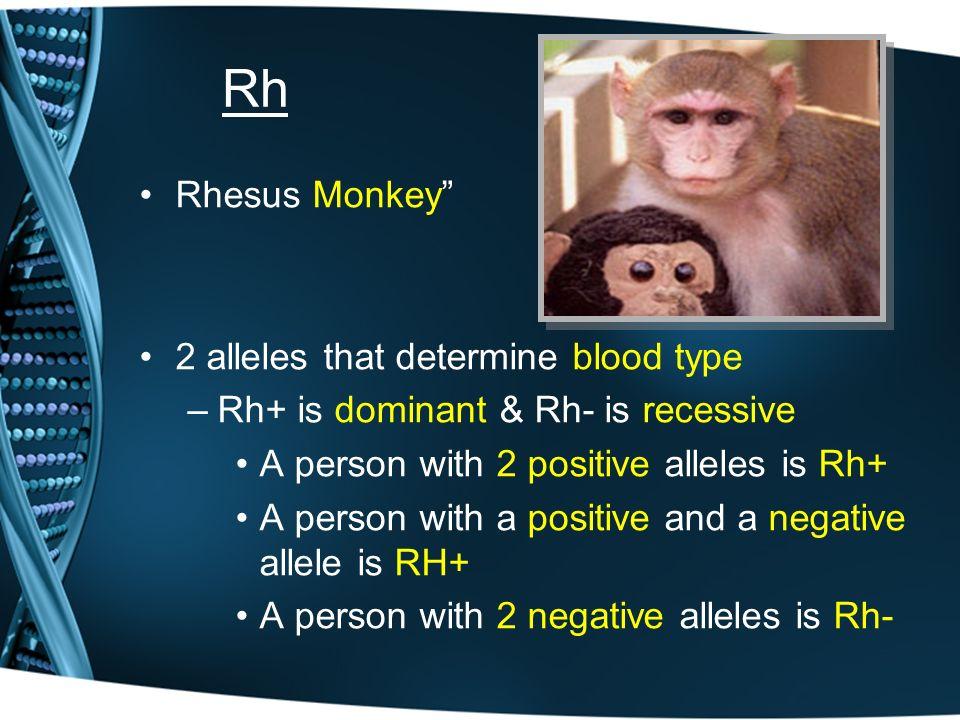 O positive blood type rhesus monkey