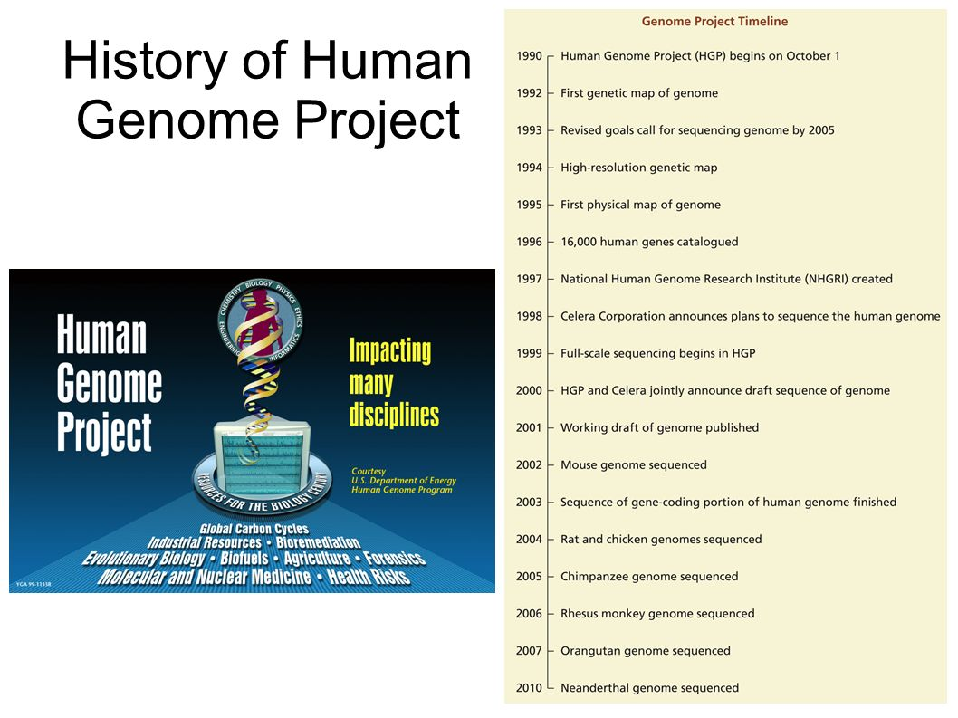 human genome project Labdish blog when a group of ambitious biologists embarked on a mission to  sequence all three billion pairs of 'letters' in the human genome.