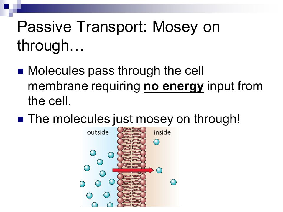 Passive Transport: Mosey on through…