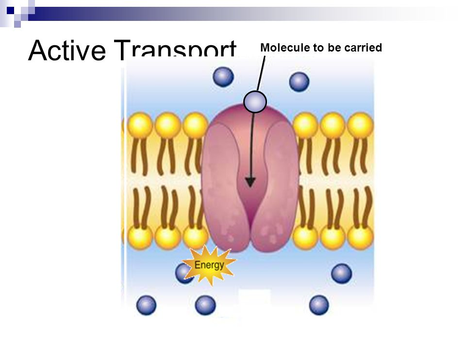 Active Transport Molecule to be carried