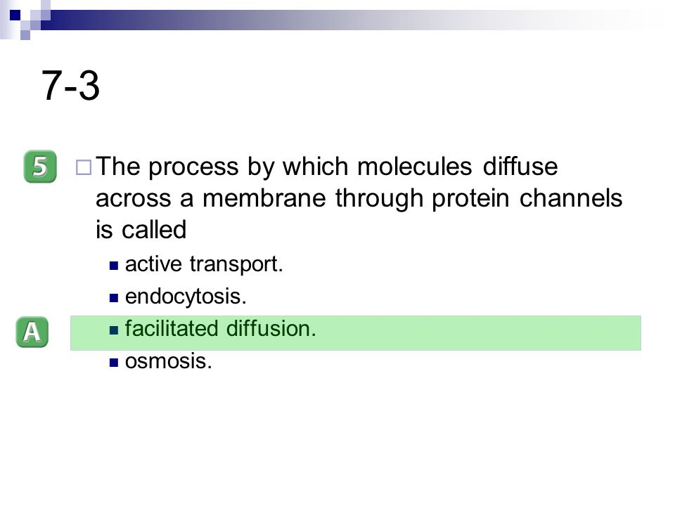 7-3 The process by which molecules diffuse across a membrane through protein channels is called. active transport.