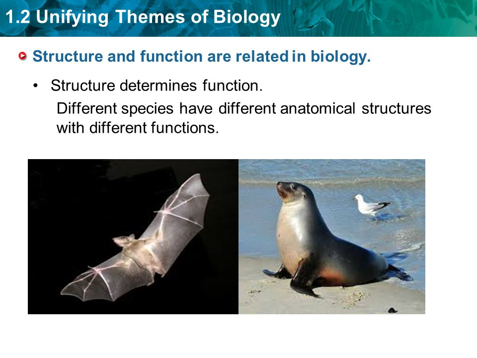 relationship of structure and function biology