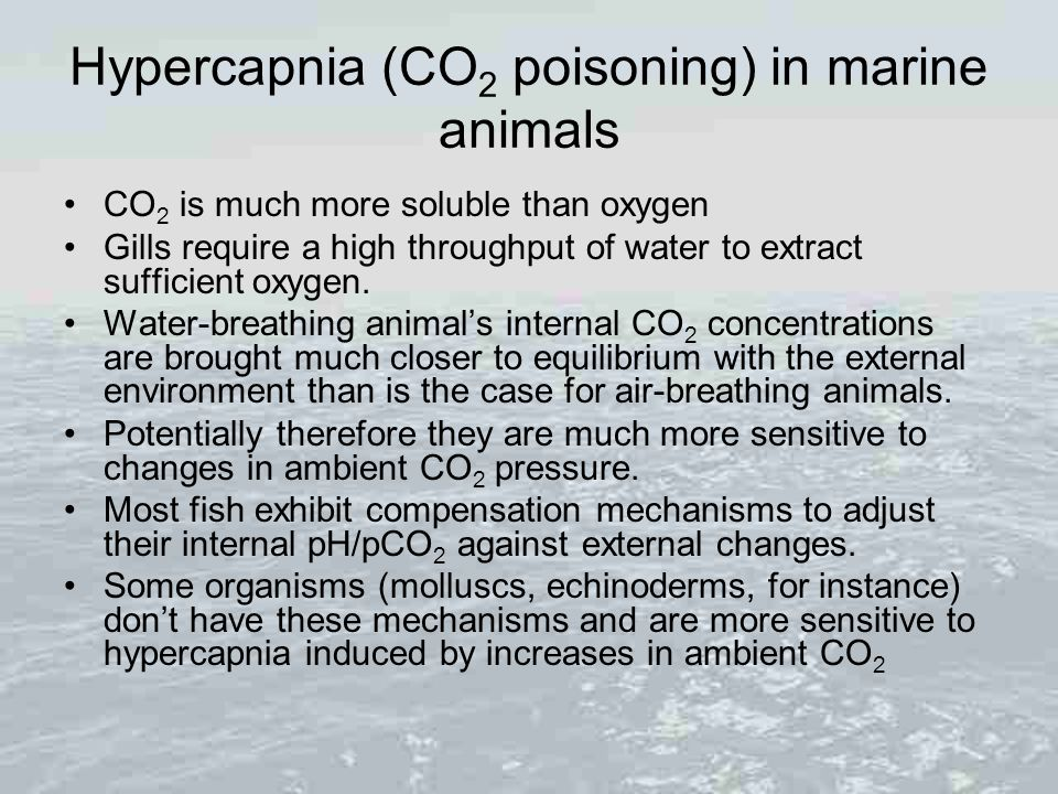 Hypercapnia (CO2 poisoning) in marine animals