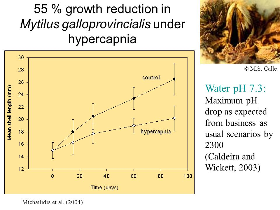 55 % growth reduction in Mytilus galloprovincialis under hypercapnia