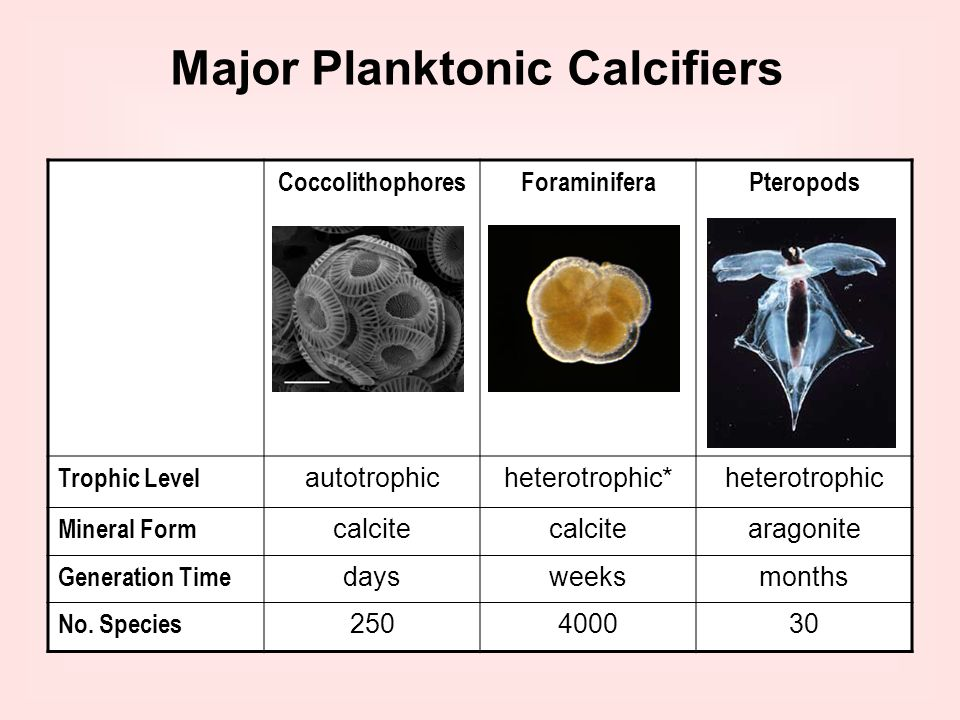 Major Planktonic Calcifiers