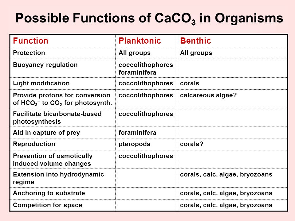 Possible Functions of CaCO3 in Organisms