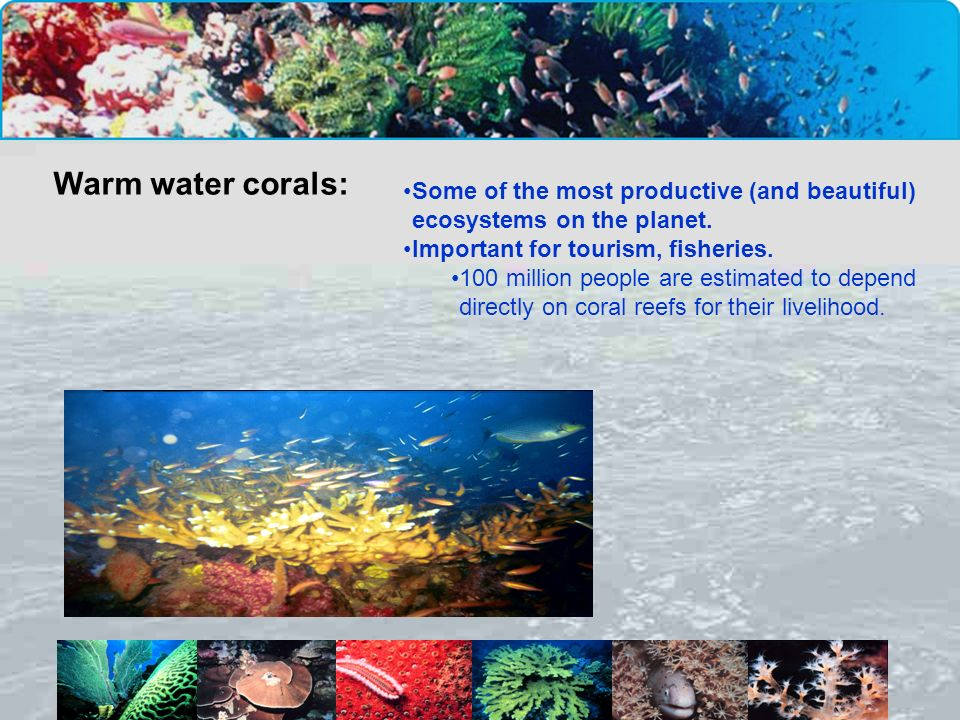 Warm water corals: Some of the most productive (and beautiful) ecosystems on the planet. Important for tourism, fisheries.