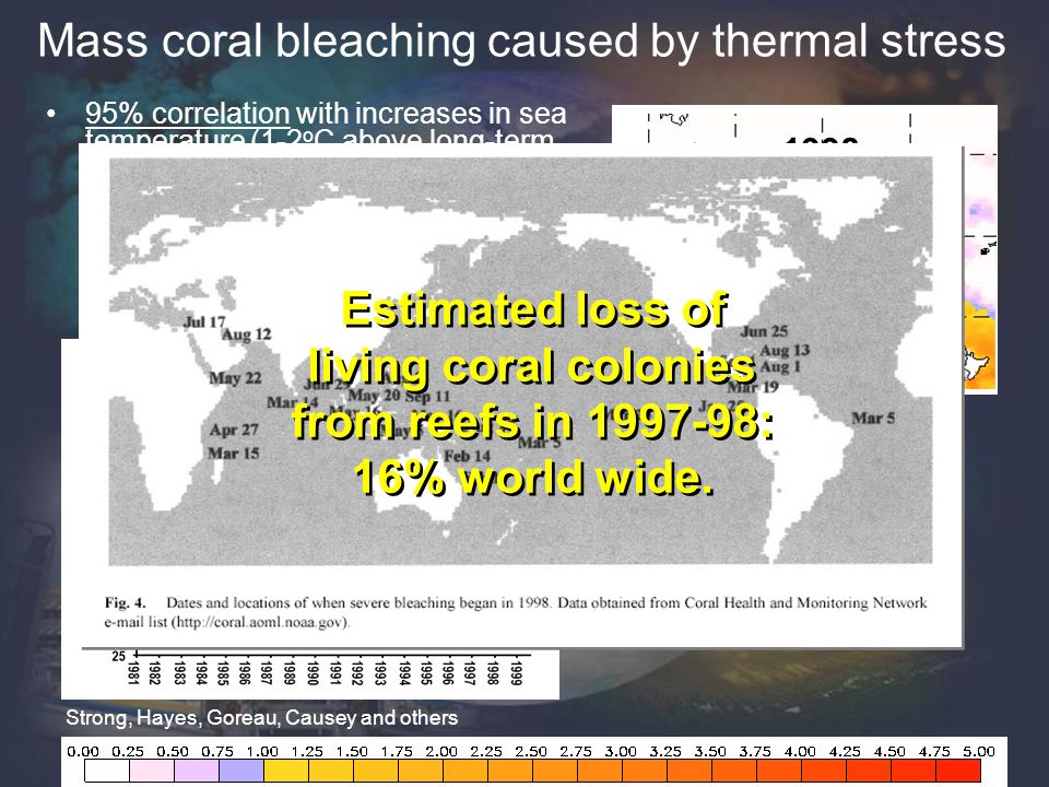 Mass coral bleaching caused by thermal stress