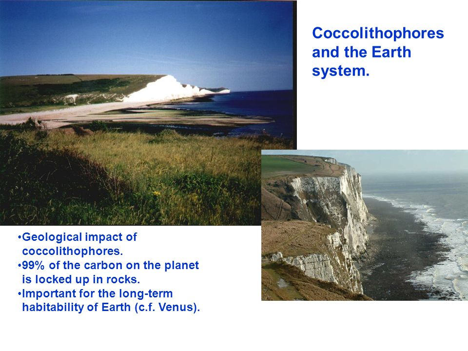 Coccolithophores and the Earth system.