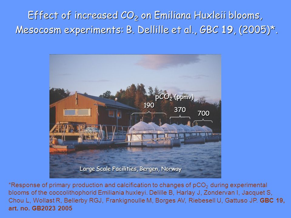 Effect of increased CO2 on Emiliana Huxleii blooms,
