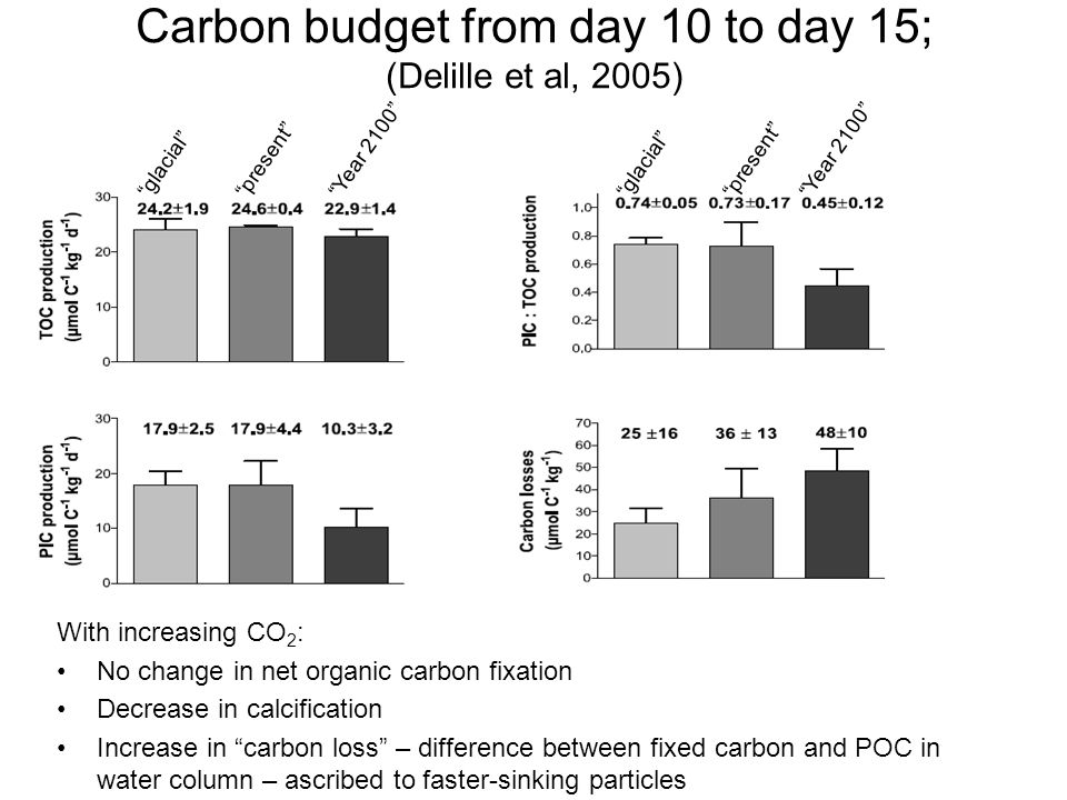 Carbon budget from day 10 to day 15; (Delille et al, 2005)