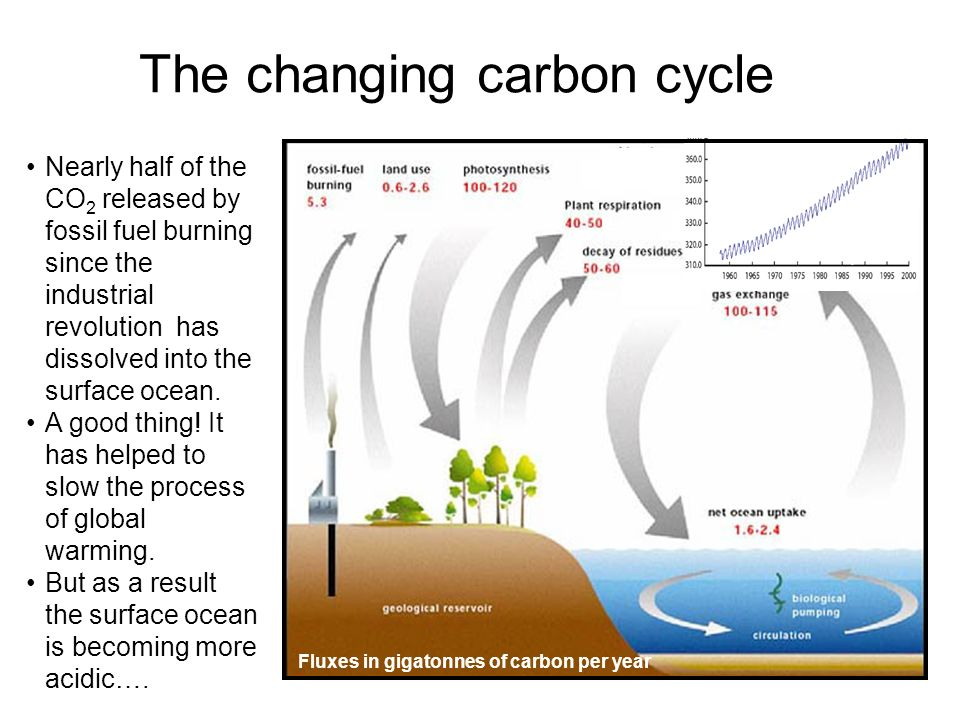 The changing carbon cycle