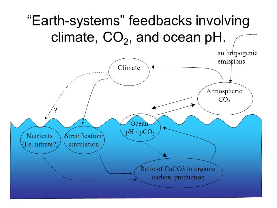 Earth-systems feedbacks involving climate, CO2, and ocean pH.