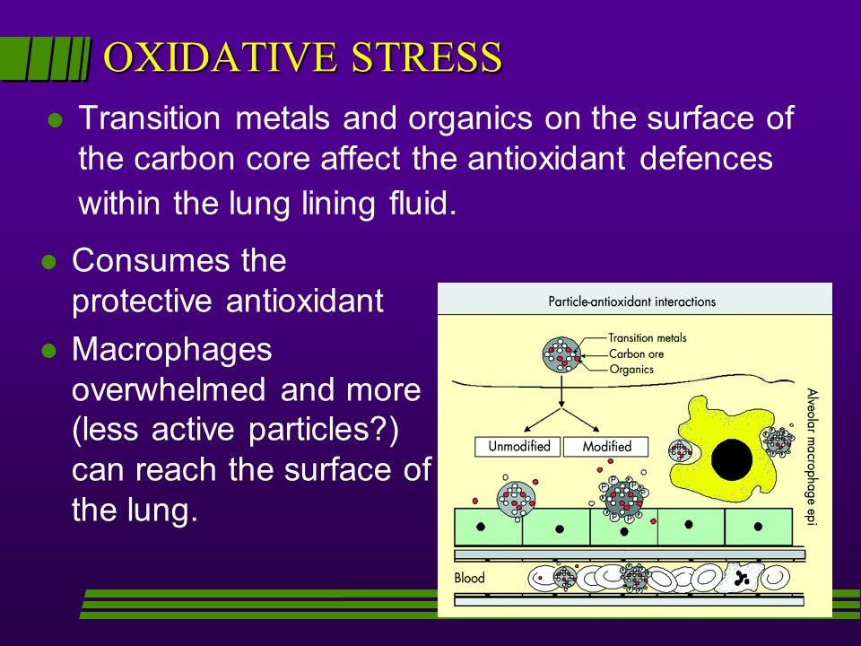 OXIDATIVE STRESS Transition metals and organics on the surface of the carbon core affect the antioxidant defences within the lung lining fluid.