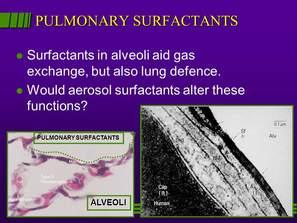 PULMONARY SURFACTANTS