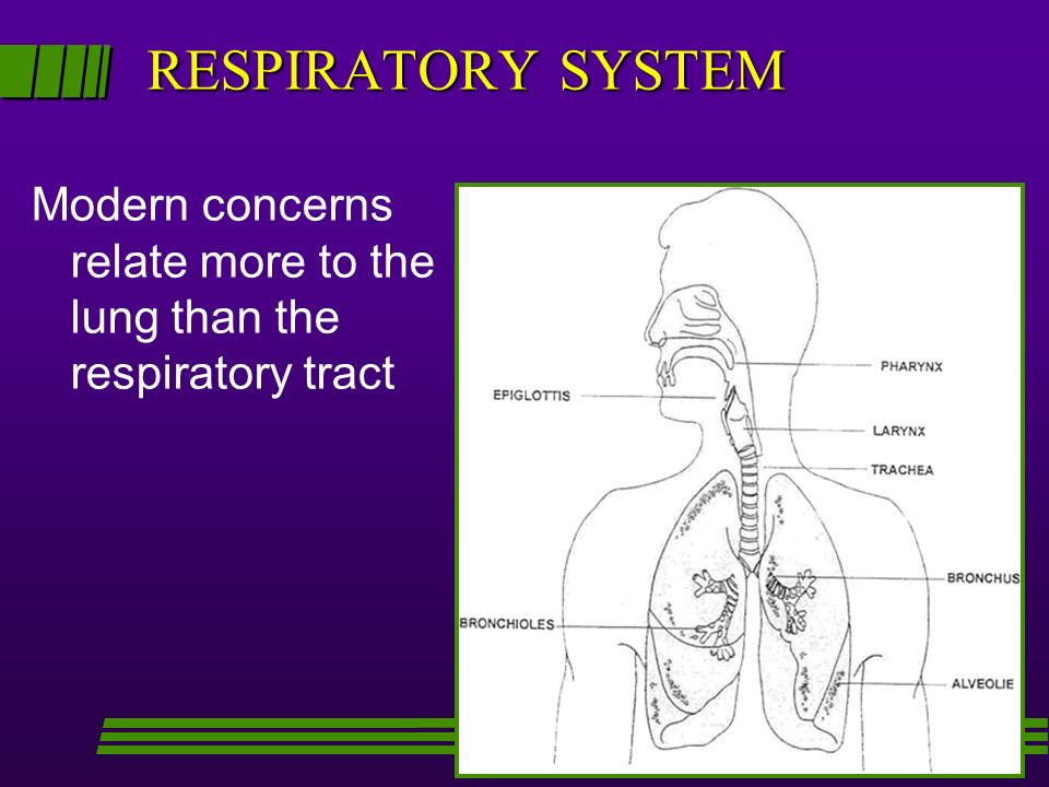 RESPIRATORY SYSTEM Modern concerns relate more to the lung than the respiratory tract