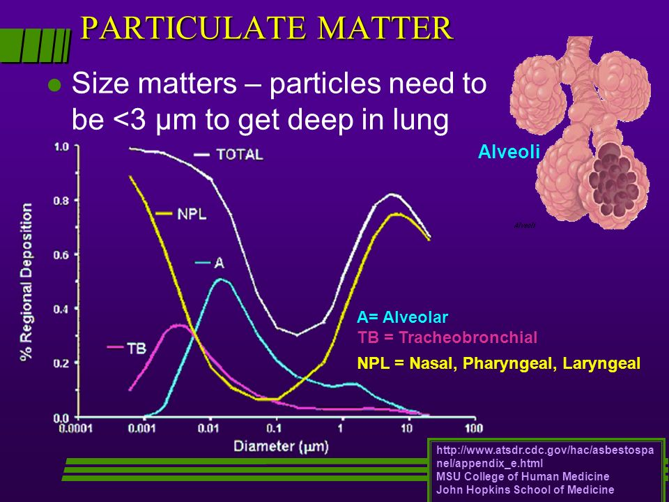 PARTICULATE MATTERSize matters – particles need to be <3 μm to get deep in lung. Alveoli. A= Alveolar.