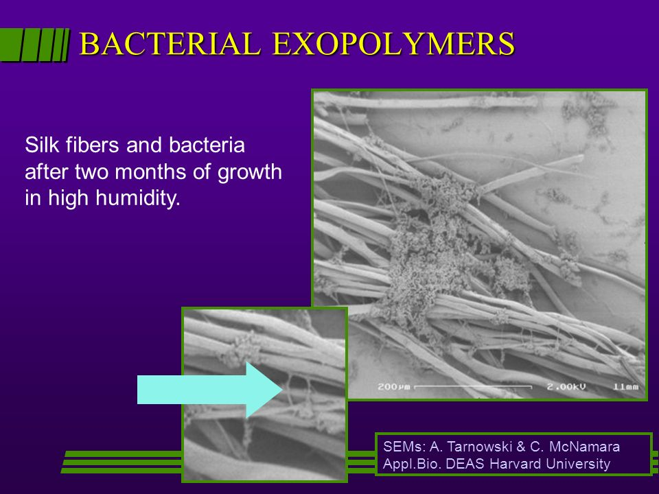 BACTERIAL EXOPOLYMERS