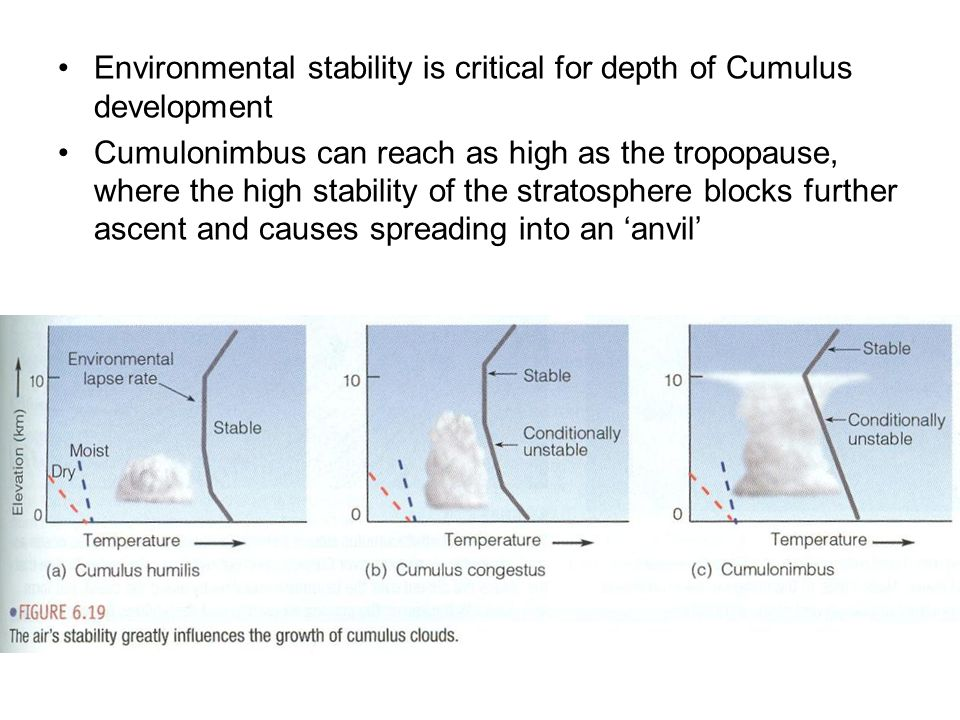 Environmental stability is critical for depth of Cumulus development