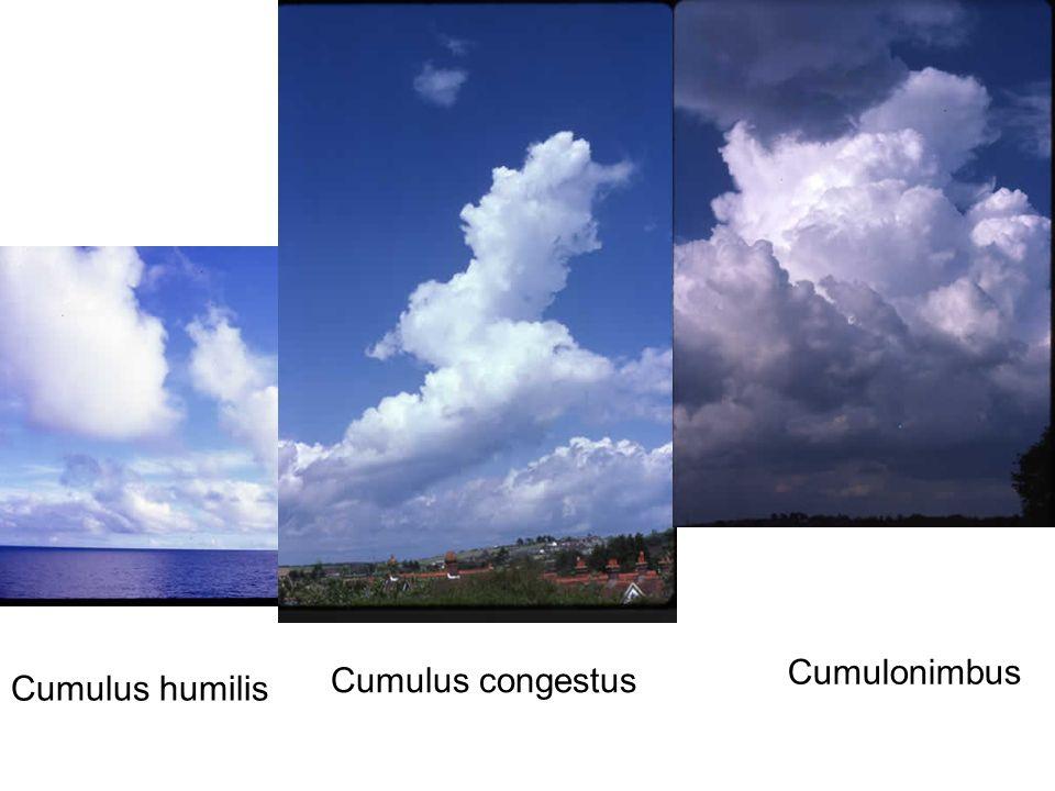 Cumulonimbus Cumulus congestus Cumulus humilis