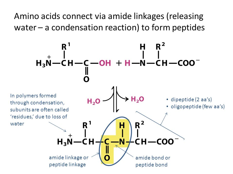 FIGURE 3-8a Uncommon amino acids - ppt video online download