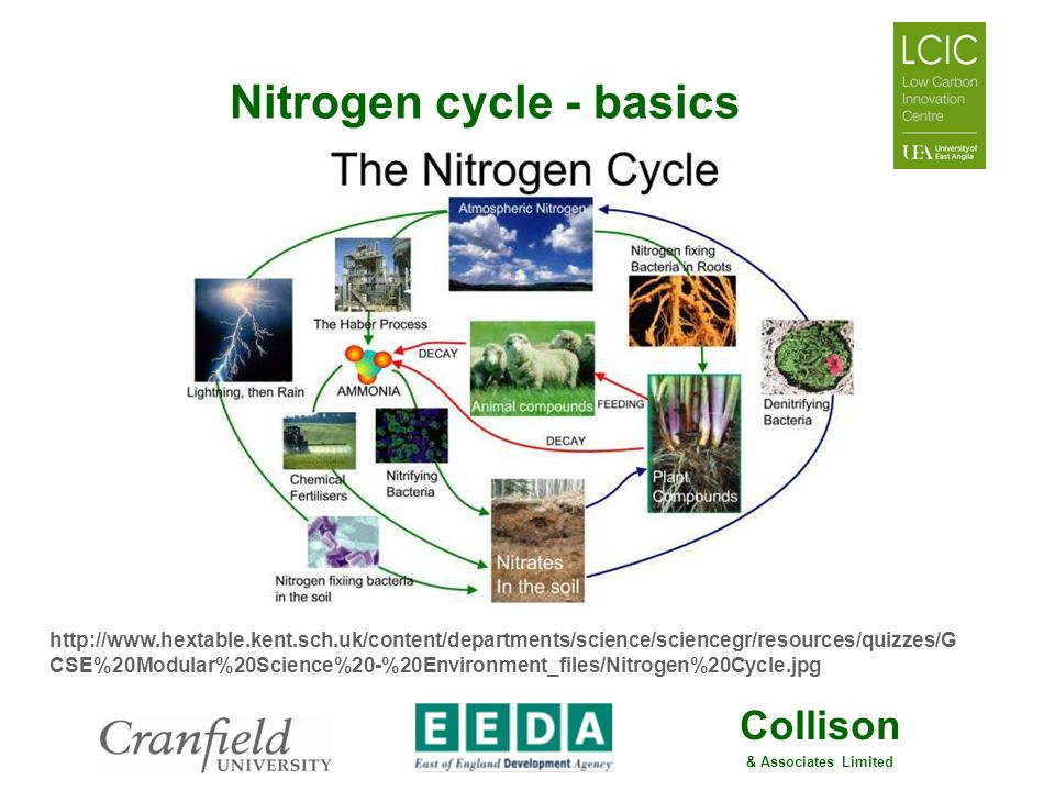 Nitrogen cycle - basics