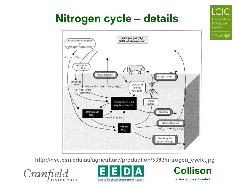 Nitrogen cycle – details