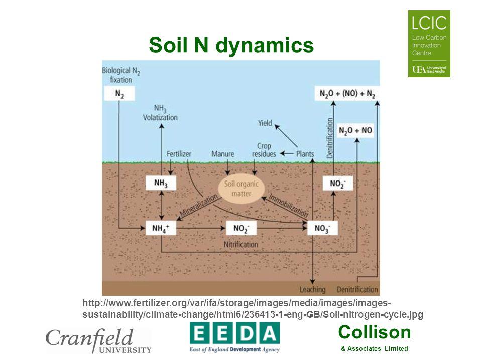 Soil N dynamics