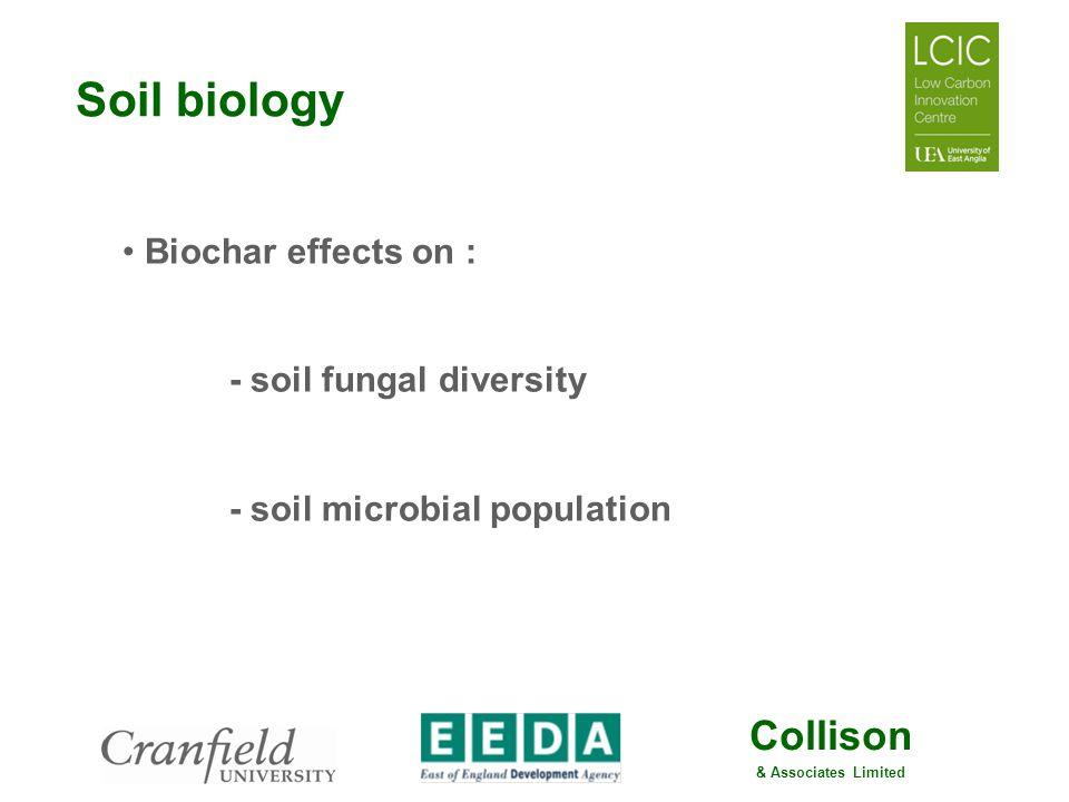 Soil biology Biochar effects on : - soil fungal diversity