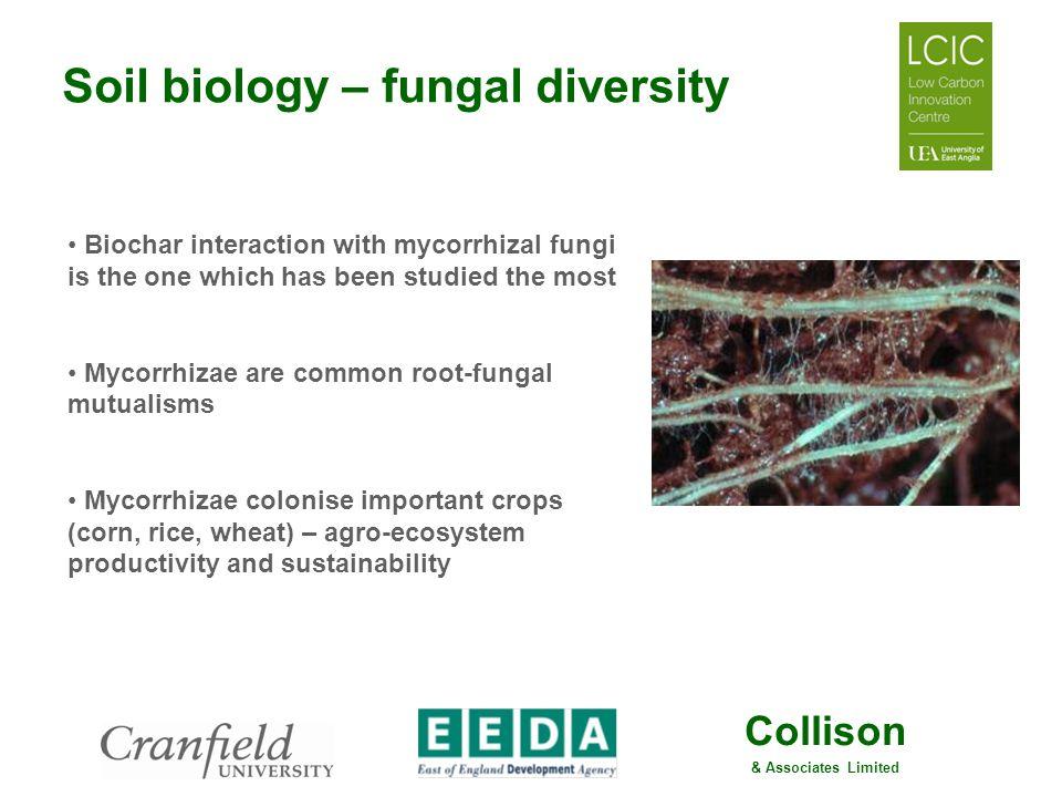 Soil biology – fungal diversity