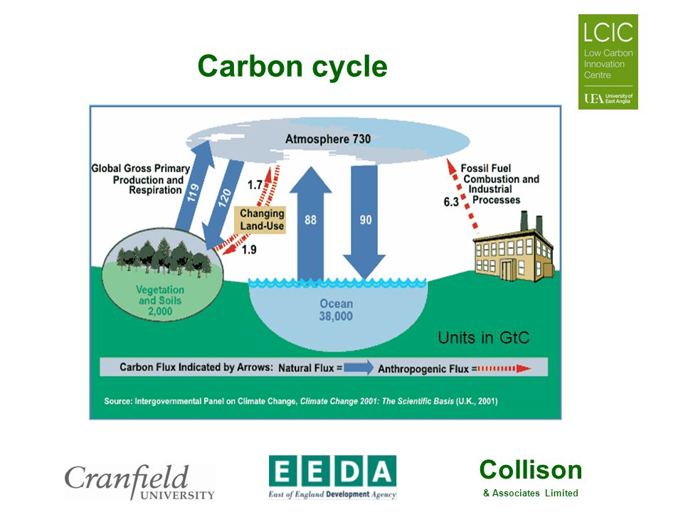 Carbon cycle Units in GtC
