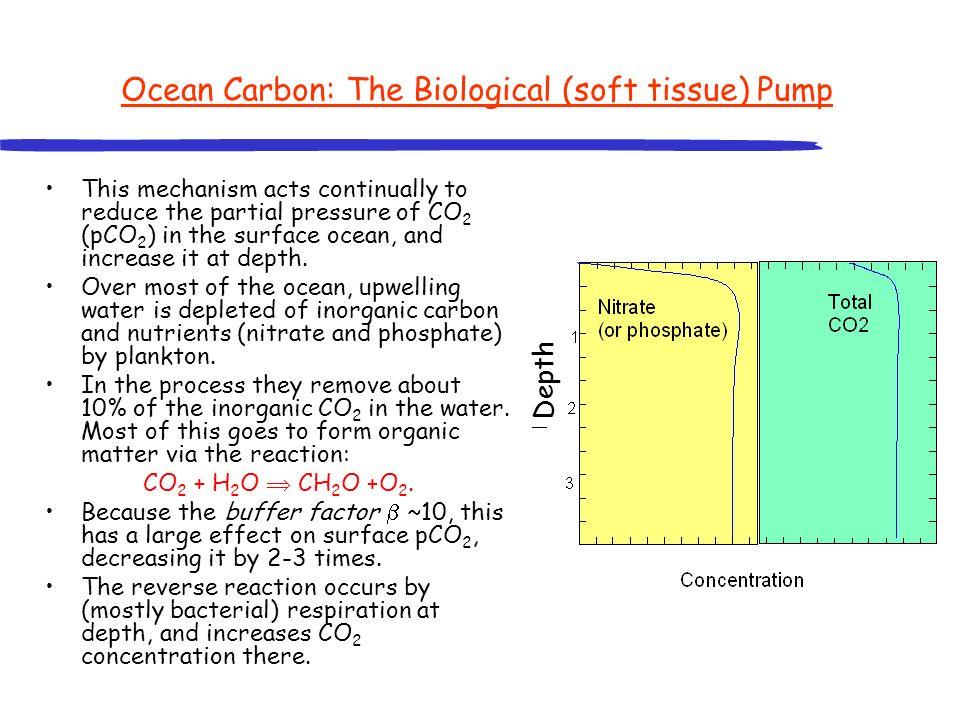 Ocean Carbon: The Biological (soft tissue) Pump