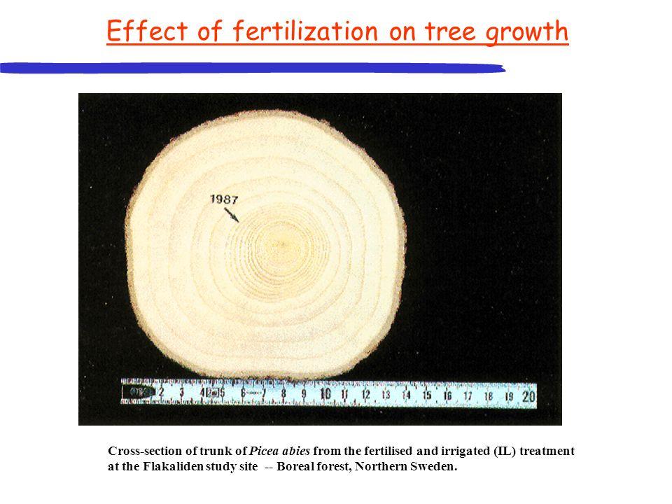 Effect of fertilization on tree growth