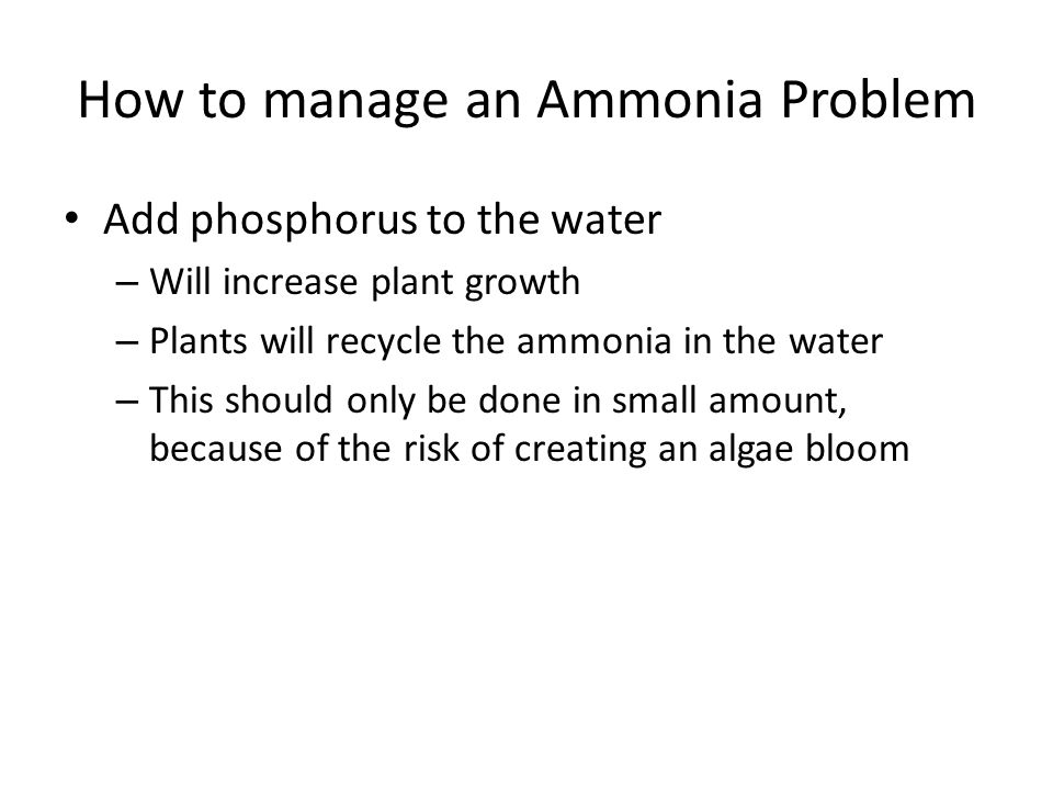 How to manage an Ammonia Problem