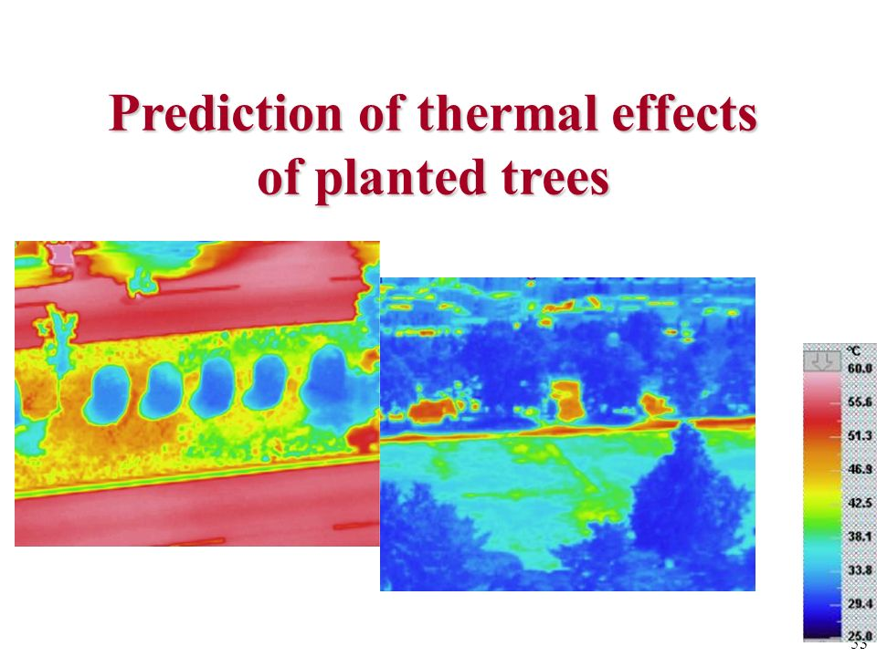 Prediction of thermal effects of planted trees