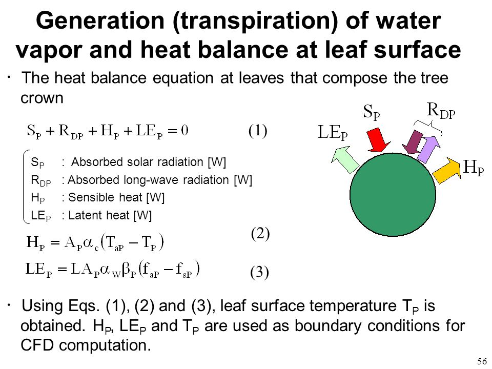 Generation (transpiration) of water vapor and heat balance at leaf surface