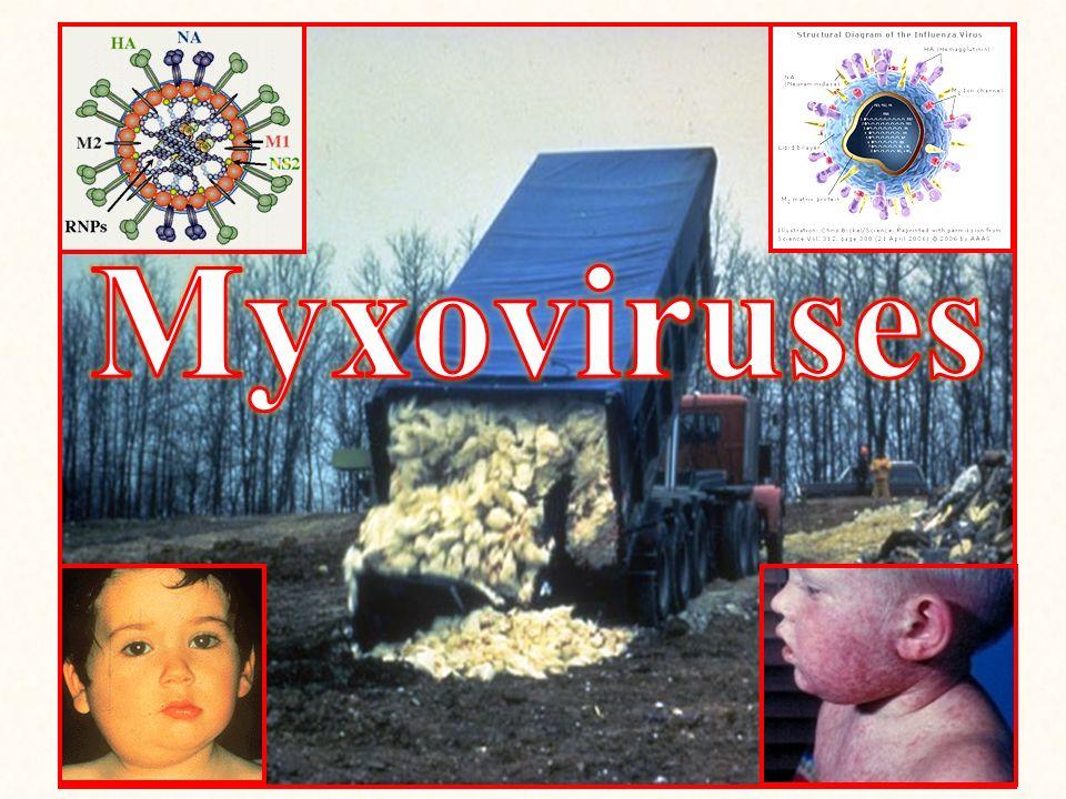 Myxoviruses