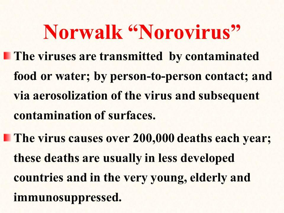 Norwalk Norovirus