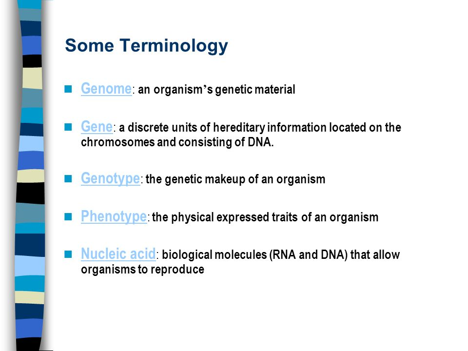 Some Terminology Genome: an organism's genetic material