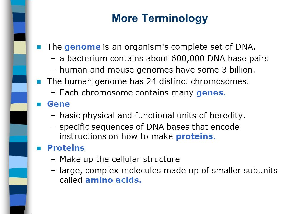 More Terminology The genome is an organism's complete set of DNA.